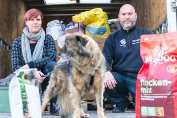 Hilfstransport für herrenlose Hunde