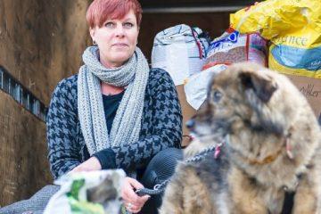 Hilfsaktion für Hunde