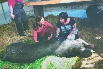 Verein rettet Tiere vor Schlachter
