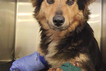 Schnelle Hilfe für in Not geratene Tiere